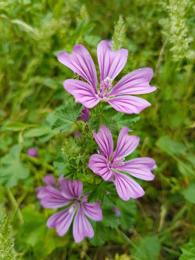 Θαυμάσια ρόδινα λουλούδια στοκ εικόνα με δικαίωμα ελεύθερης χρήσης