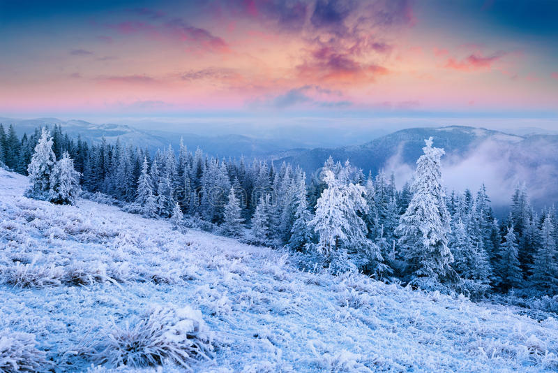Θαυμάσια σκηνή Χριστουγέννων στο δάσος βουνών στο ηλιόλουστο πρωί στοκ εικόνα με δικαίωμα ελεύθερης χρήσης