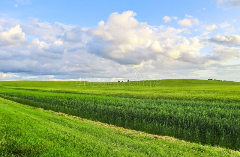 Θαυμάσιοι πράσινοι τομέας, λόφοι, δέντρα και μπλε ουρανός με τα σύννεφα στην επαρχία r στοκ εικόνα