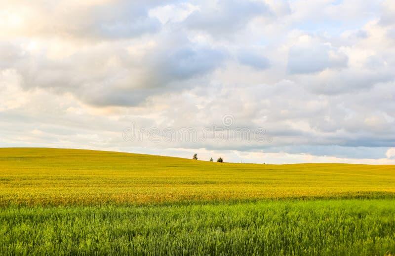 Θαυμάσιοι τομέας, λόφοι, δέντρα και μπλε ουρανός με τα σύννεφα στην επαρχία o στοκ εικόνες
