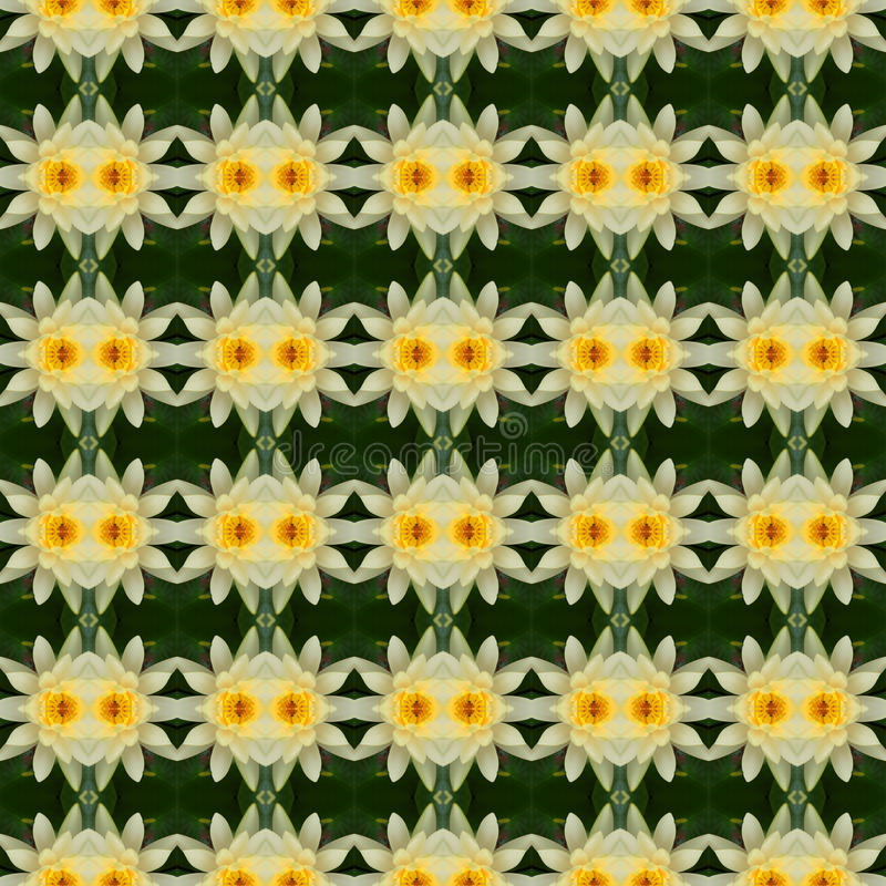 Θαυμάσιος κίτρινος λωτός στην πλήρη άνθιση άνευ ραφής διανυσματική απεικόνιση