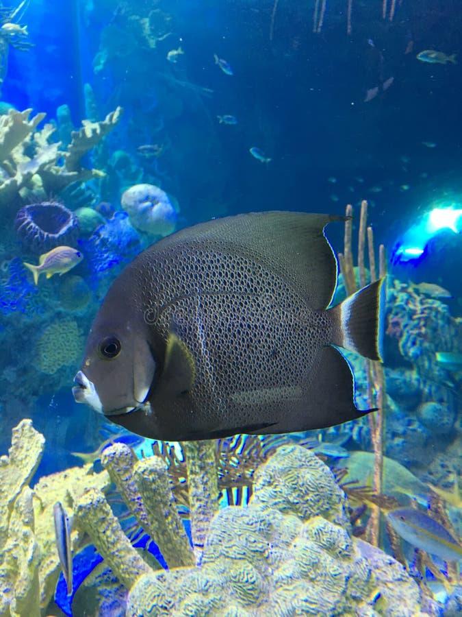 Θαλάσσια ψάρια στοκ φωτογραφία