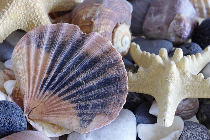 Θαλασσινά κοχύλια κοχυλιών θάλασσας στοκ φωτογραφία με δικαίωμα ελεύθερης χρήσης
