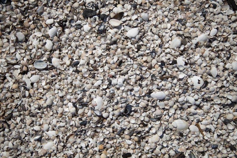 θαλασσινά κοχύλια παραλ στοκ φωτογραφία