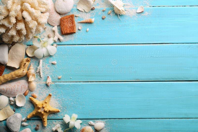 Θαλασσινά κοχύλια στο ξύλο στοκ φωτογραφία με δικαίωμα ελεύθερης χρήσης