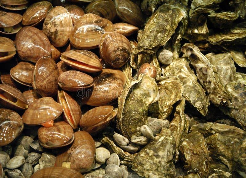 Θαλασσινά, fruits de mer στοκ εικόνες