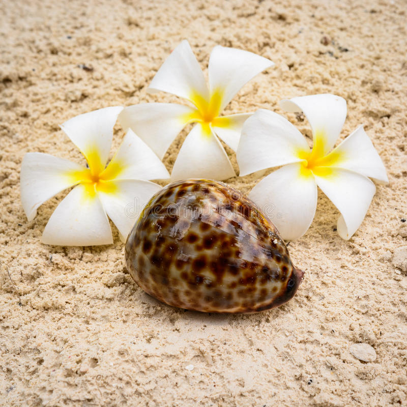 Θαλασσινό κοχύλι και σύνθεση λουλουδιών στοκ εικόνες
