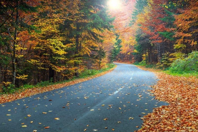 Θεαματικός ρομαντικός δρόμος στο ζωηρόχρωμο δάσος φθινοπώρου στοκ εικόνες