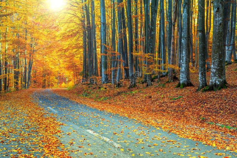 Θεαματικός ρομαντικός δρόμος στο ζωηρόχρωμο δάσος φθινοπώρου στοκ φωτογραφία με δικαίωμα ελεύθερης χρήσης