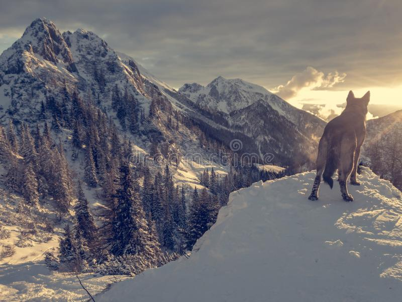 Θεαματικό τοπίο χειμερινών βουνών που φωτίζεται με τη ρύθμιση του ήλιου στοκ εικόνες με δικαίωμα ελεύθερης χρήσης