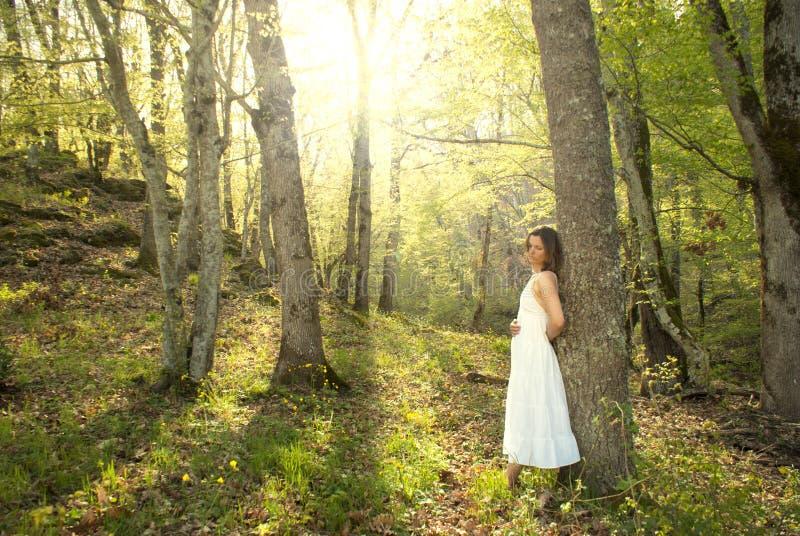 θεραπεύοντας φύση στοκ φωτογραφίες