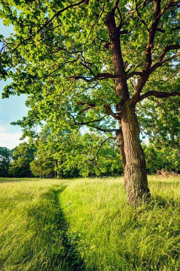 Θερινά ηλιόλουστα δασικά δέντρα και πράσινη χλόη Φύση στοκ φωτογραφία με δικαίωμα ελεύθερης χρήσης