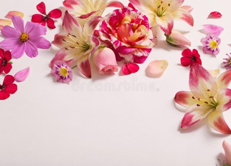 Θερινά λουλούδια στο άσπρο υπόβαθρο στοκ φωτογραφίες