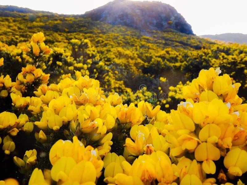 Θερινά λουλούδια στο Εδιμβούργο Σκωτία στοκ εικόνα με δικαίωμα ελεύθερης χρήσης