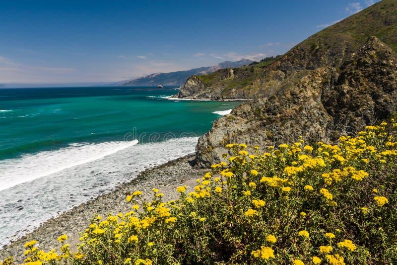 Θερινά λουλούδια που ανθίζουν κατά μήκος της παραλίας στοκ εικόνες