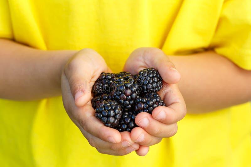 Θερινά χέρια φρούτων μούρων βατόμουρων φρούτων μούρων βατόμουρων στοκ εικόνα