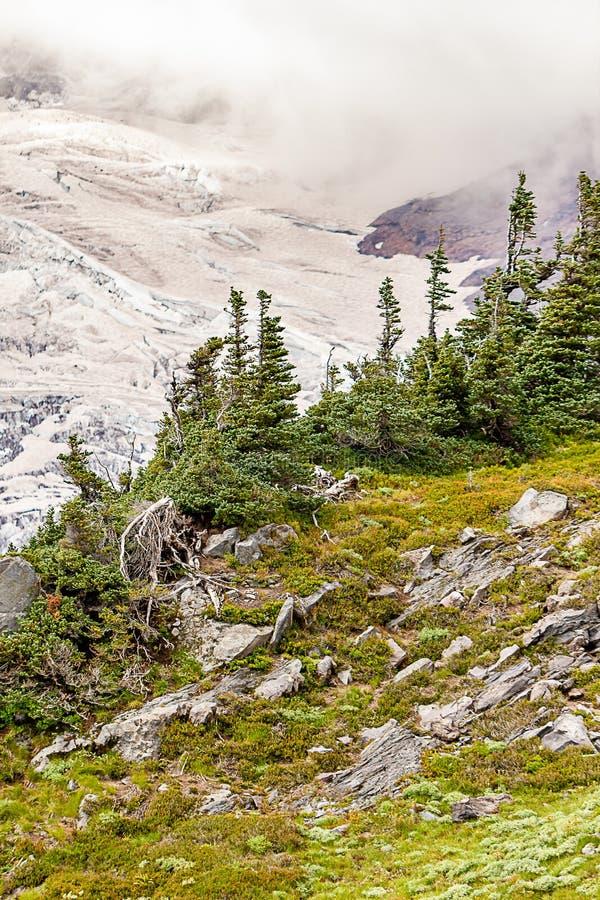 θερινές απόψεις της αλπικής άκρης λιβαδιών όπου συναντά την παγετώδη πλευρά βουνών στοκ εικόνες με δικαίωμα ελεύθερης χρήσης