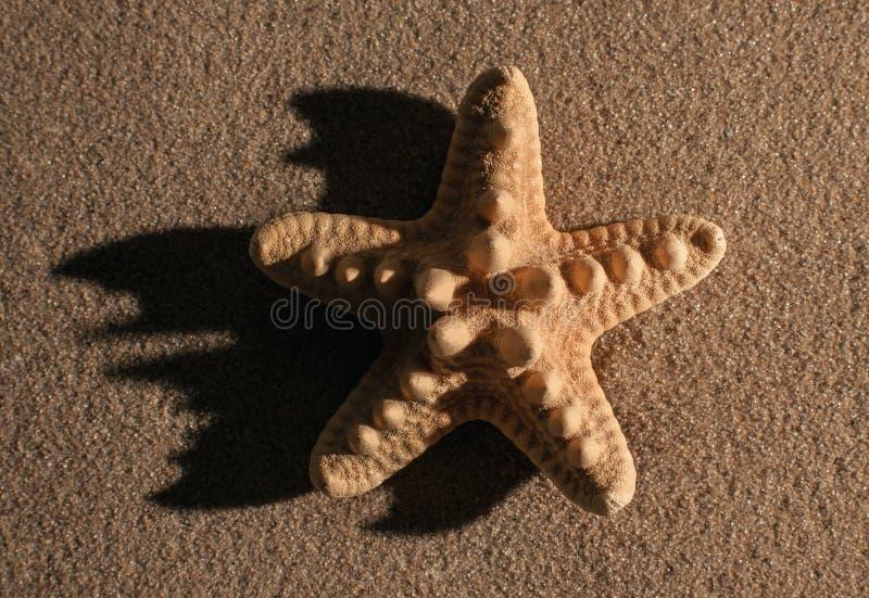 Θερινή ανασκόπηση Θερινά εξαρτήματα, θερινή έννοια Αστερίας με την άμμο ως υπόβαθρο στοκ φωτογραφία με δικαίωμα ελεύθερης χρήσης