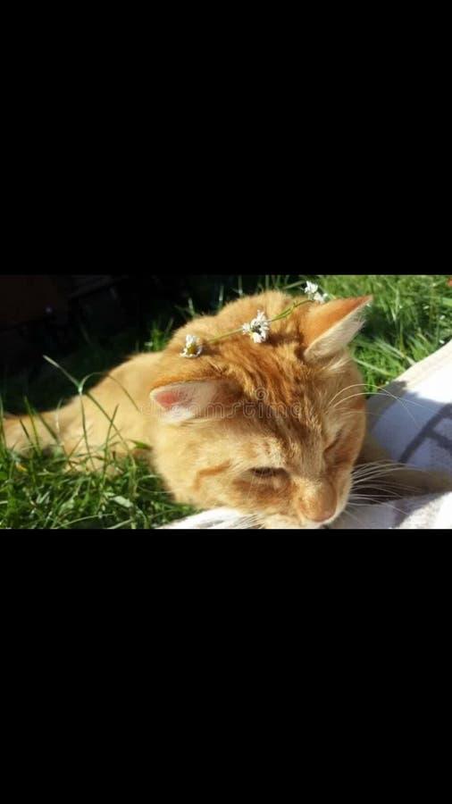Θερινή γάτα στοκ φωτογραφίες