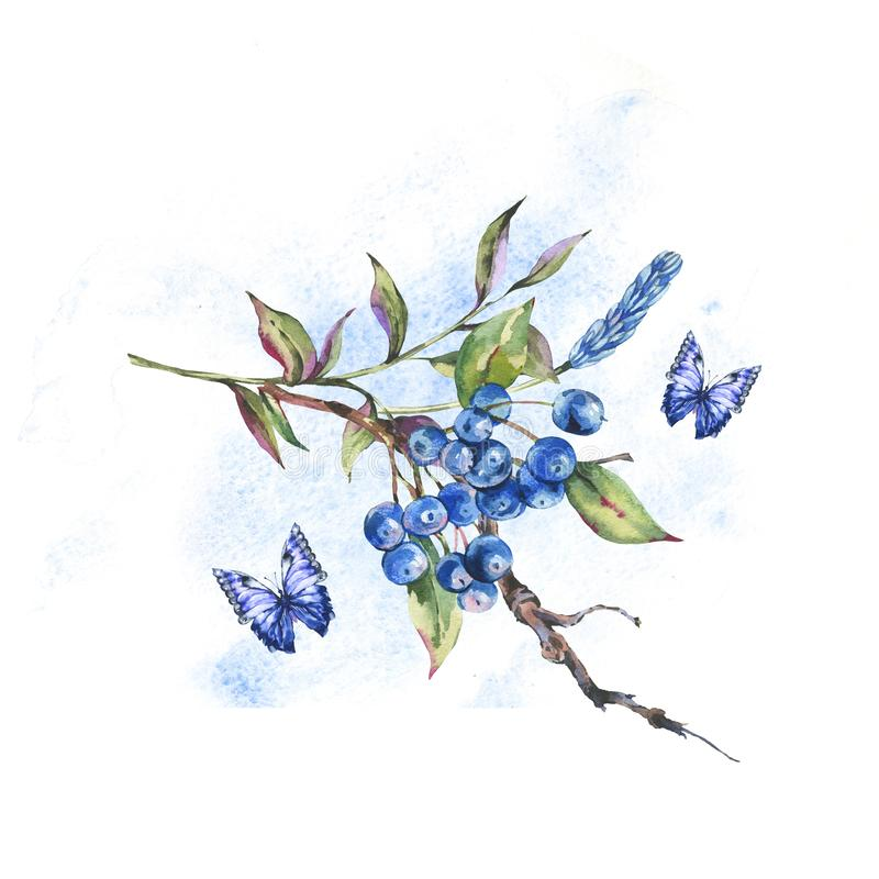 Θερινή δασική δέσμη Watercolor των σκούρο μπλε μούρων, πράσινα φύλλα, πεταλούδα ελεύθερη απεικόνιση δικαιώματος