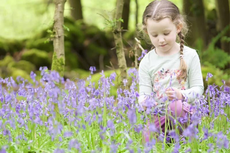 Θερινή δασική δασώδης περιοχή εξωτερικού λουλουδιών επιλογής χαμόγελου νέων κοριτσιών ευτυχής bluebell την άνοιξη στοκ φωτογραφία