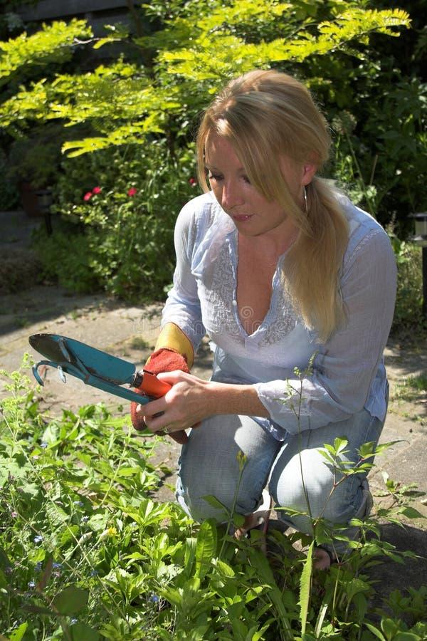 θερινή εργασία κήπων ημέρα&sigmaf στοκ εικόνες