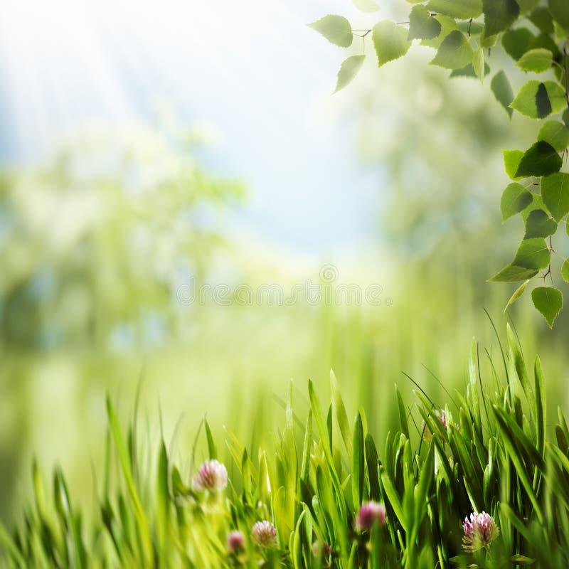 Θερινή ημέρα ομορφιάς στο δάσος στοκ εικόνες
