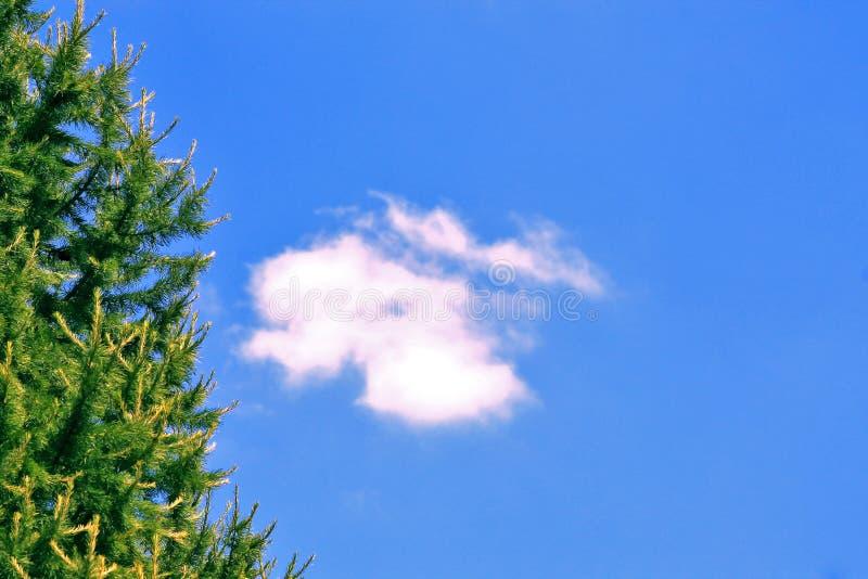 Θερινή ημέρα, fir-tree στοκ εικόνες