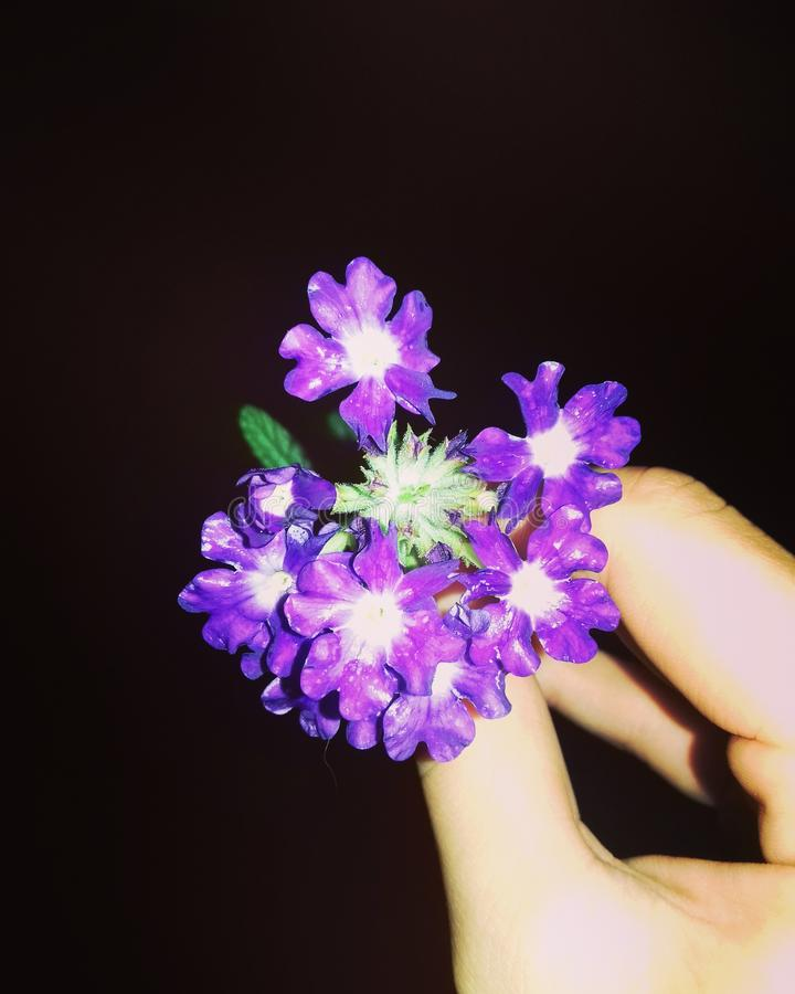 Θερινή θερμή νύχτα, όμορφο λουλούδι στοκ εικόνα