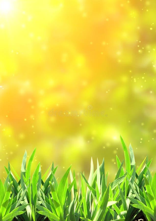 Θερινή πράσινη χλόη στοκ φωτογραφία με δικαίωμα ελεύθερης χρήσης