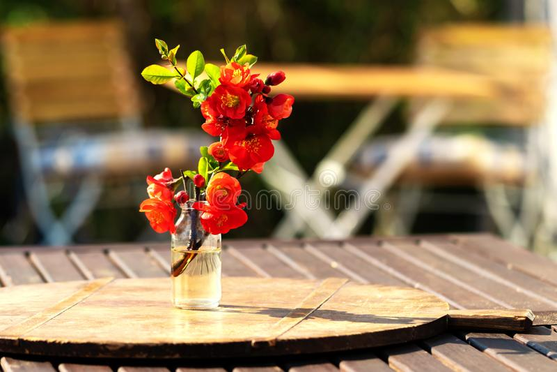 Θερινή φρεσκάδα με την ανθοδέσμη κυδωνιών, που κάθεται στον κήπο στοκ εικόνες