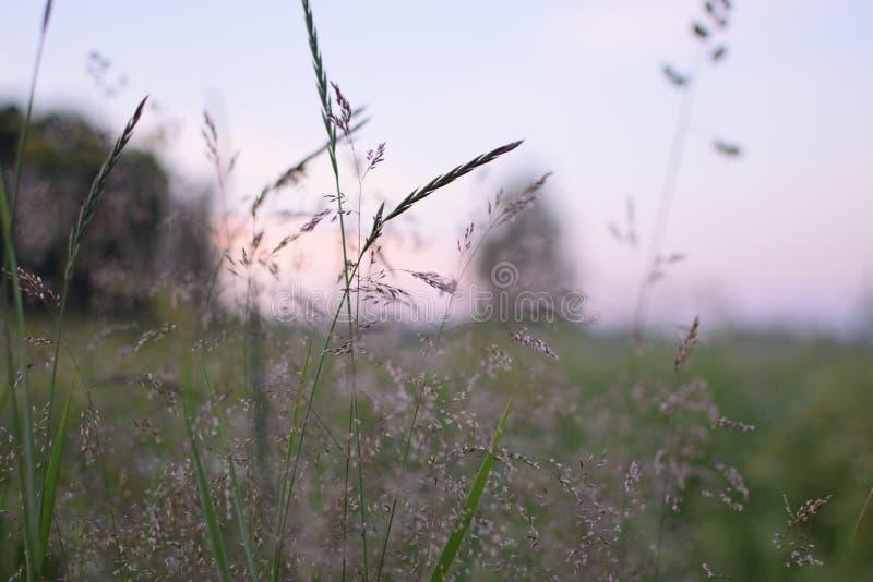 θερινή όψη χλόης πεδίων γωνίας ευρέως στοκ φωτογραφία
