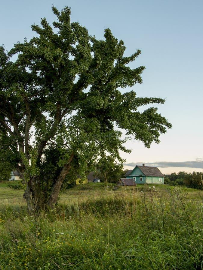 ΘΕΡΙΝΟ τοπίο Δέντρο και πράσινο λιβάδι χώρα στοκ φωτογραφία