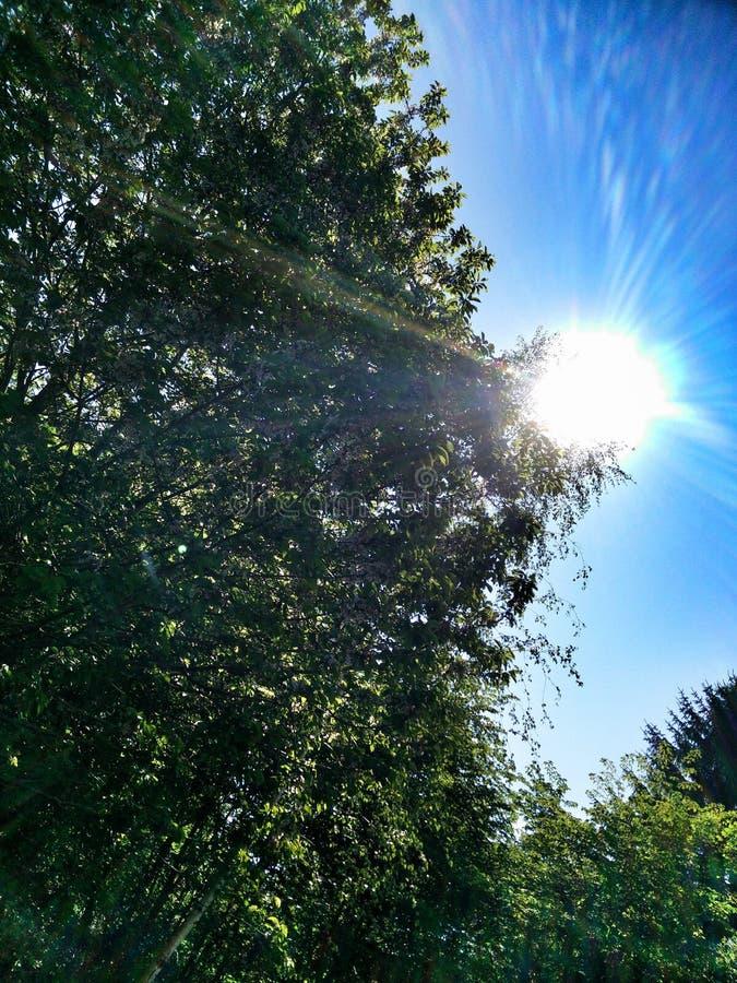 Θερινός ήλιος στοκ εικόνες με δικαίωμα ελεύθερης χρήσης