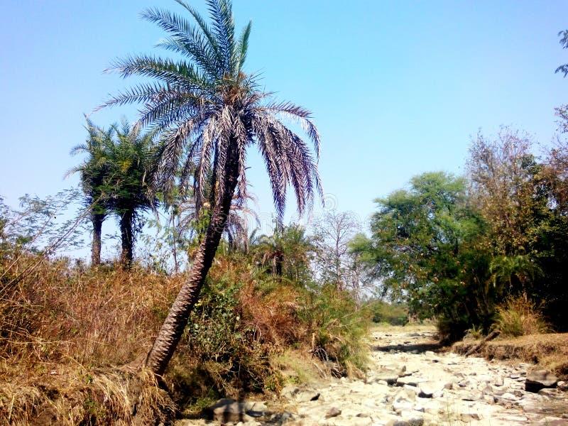 Θερινός ξηρός ποταμός στο τροπικό ινδικό δάσος στοκ εικόνες