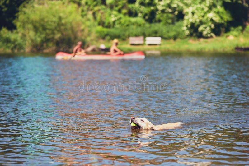 Θερινός χρόνος με το σκυλί στοκ φωτογραφία