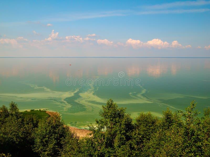 Θερινό άνθισμα του νερού στην περιοχή της Ρωσίας Ilmen Novgorod λιμνών στοκ εικόνες