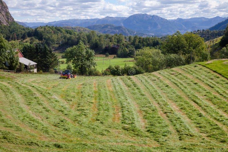 Θερινό αγροτικό τοπίο με το τρακτέρ που κάνει windrows του πρόσφατα κομμένου σανού έναν τομέα στη Νορβηγία Σκανδιναβία στοκ εικόνες με δικαίωμα ελεύθερης χρήσης