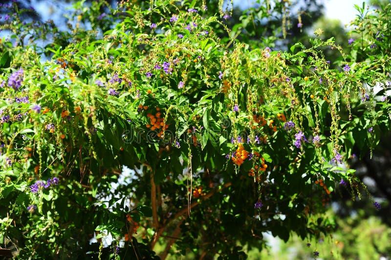 Θερινό δέντρο χρώματος στοκ φωτογραφίες