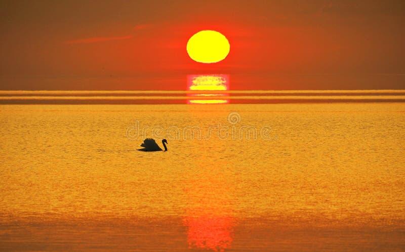 Θερινό ηλιοβασίλεμα και πορτοκαλής ουρανός πέρα από τη θάλασσα, κύκνος στοκ φωτογραφία με δικαίωμα ελεύθερης χρήσης