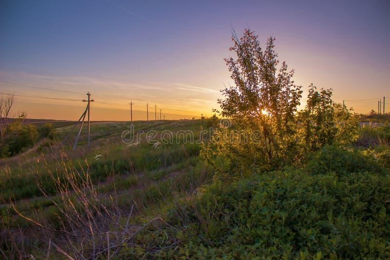Θερινό ηλιοβασίλεμα στον τομέα με τους θάμνους που βλέπουν τον ήλιο μέσω των φύλλων στοκ εικόνες