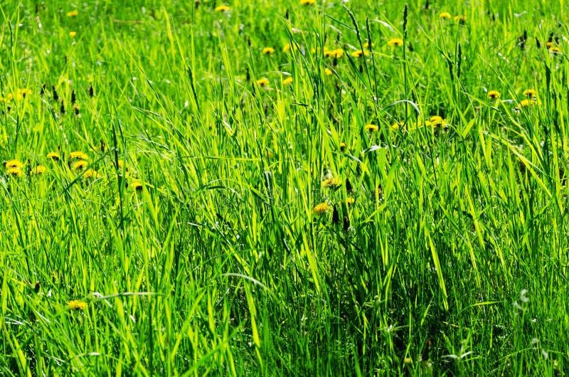 Θερινό λιβάδι, λουλούδια και πράσινη χλόη στοκ εικόνες με δικαίωμα ελεύθερης χρήσης