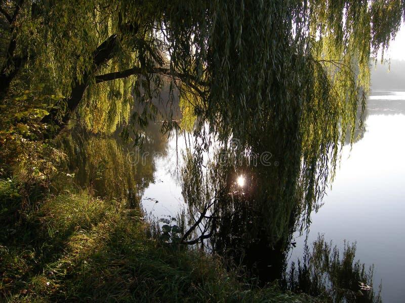 Θερινό μεσημέρι στον ποταμό Αντανάκλαση του ήλιου στο νερό στοκ εικόνα