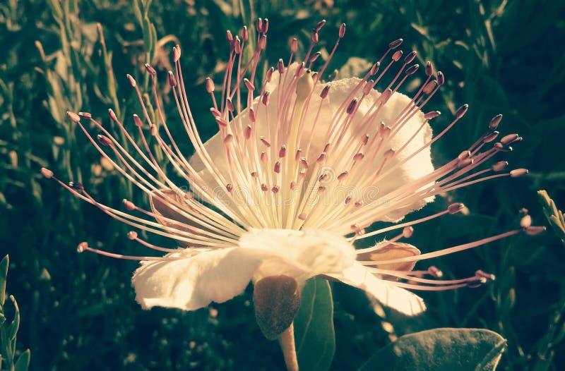 Θερινό λουλούδι στοκ εικόνα