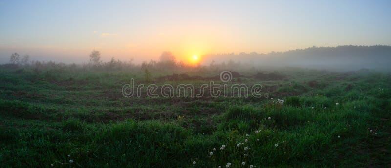 Θερινό πανόραμα του ομιχλώδους λιβαδιού στην ανατολή στοκ φωτογραφίες με δικαίωμα ελεύθερης χρήσης