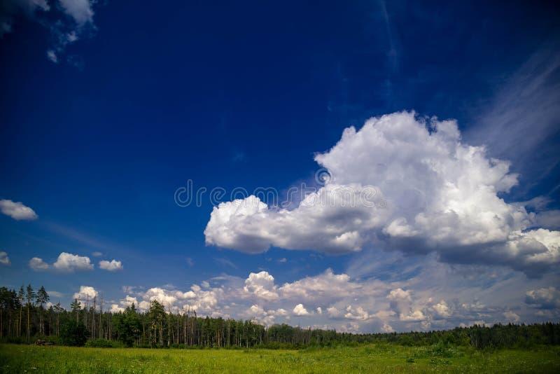 Θερινό τοπίο με την πράσινη χλόη πριν από το δάσος από τα πεύκα σκαφών στην ηλιόλουστη ημέρα με το μπλε ουρανό στοκ φωτογραφίες