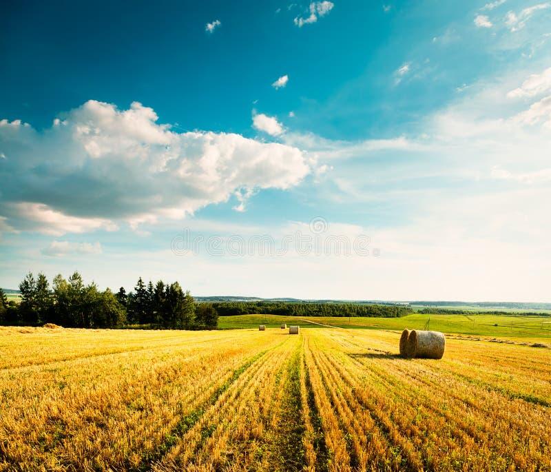 Θερινό τοπίο με τον κομμένους τομέα και τα σύννεφα σίτου στοκ φωτογραφία με δικαίωμα ελεύθερης χρήσης