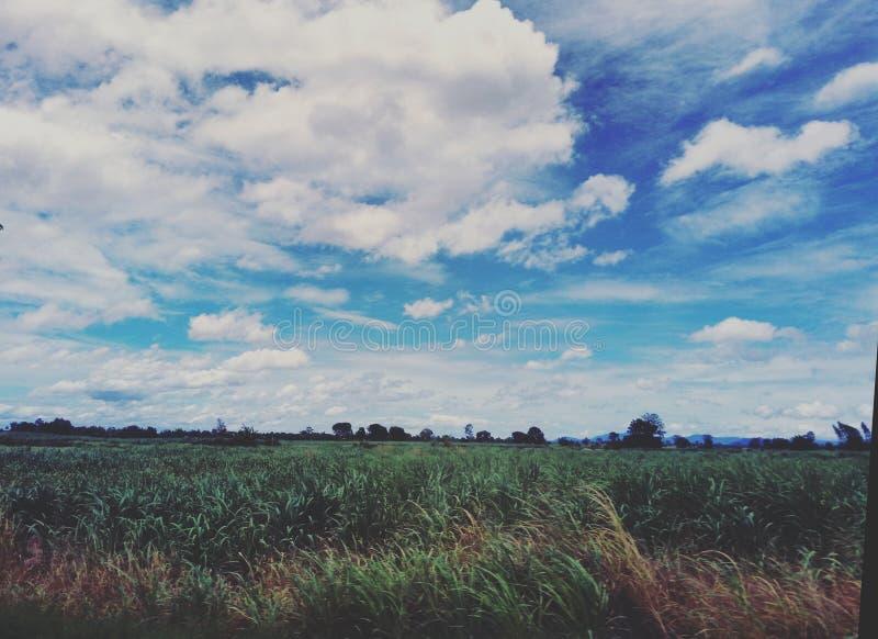 Θερινό τοπίο με τον πράσινο τομέα κάτω από τα σύννεφα στον ουρανό στοκ φωτογραφίες με δικαίωμα ελεύθερης χρήσης