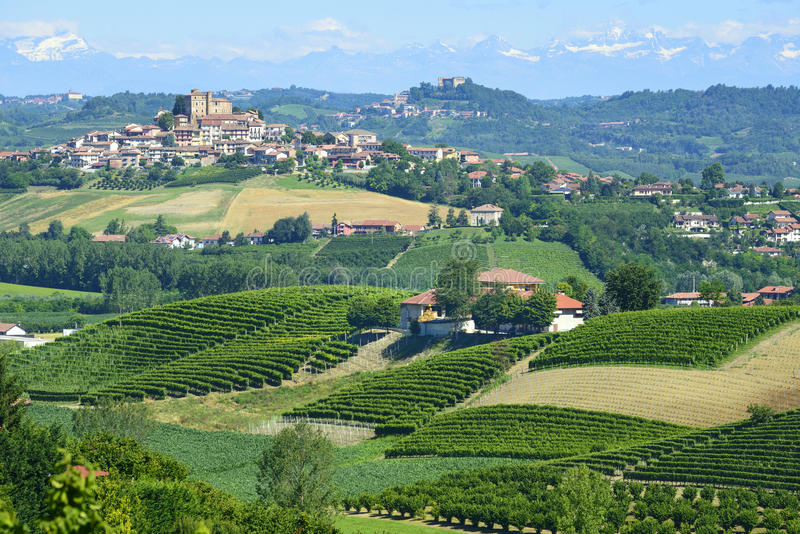 Θερινό τοπίο σε Langhe (Ιταλία) στοκ φωτογραφίες με δικαίωμα ελεύθερης χρήσης