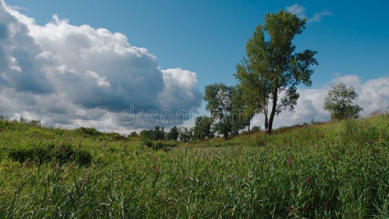 Θερινό τοπίο στη Σιβηρία, Ρωσία στοκ φωτογραφία με δικαίωμα ελεύθερης χρήσης
